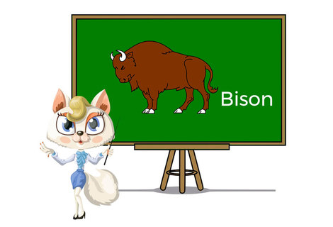 Pets bison