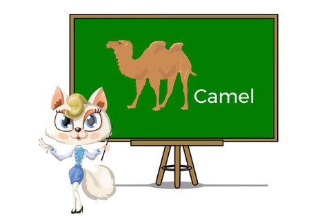 Pets camel