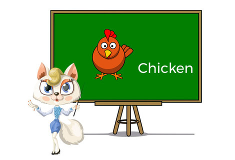 Pets chicken