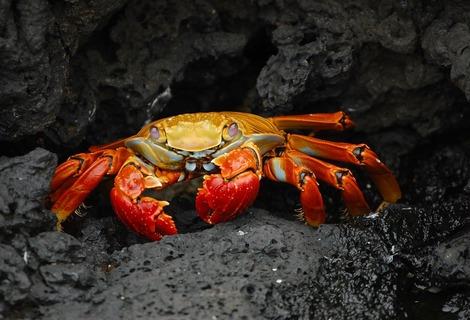 Crab 63084 1280