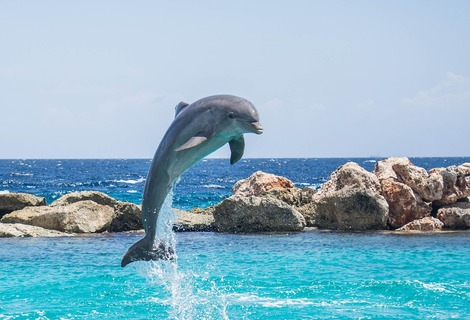 Dolphin 906176 1280