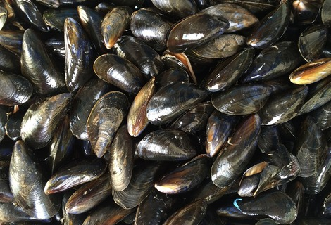 Mussels 1665863 1280