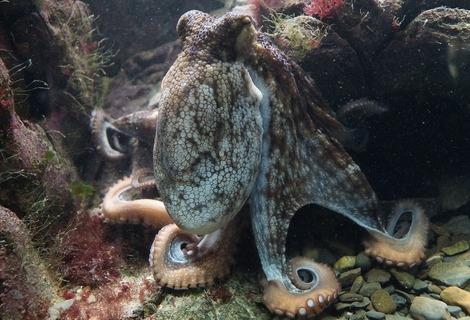 Octopus 428745 1280