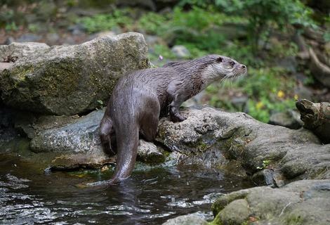 Otter 4488621 1280