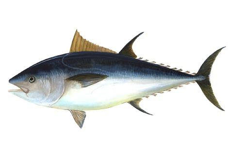 Tuna 69317 1280
