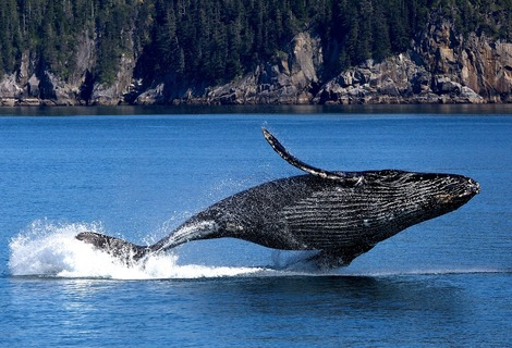 Whale 3694489 1280