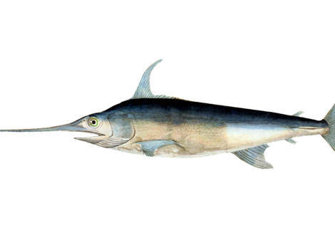 Fish 2027940 1280