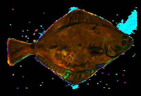 Flounder 2358302 1280